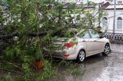 Упало дерево на автомобиль: что делать в такой ситуации?