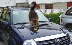 Самые распространённые суеверия у водителей